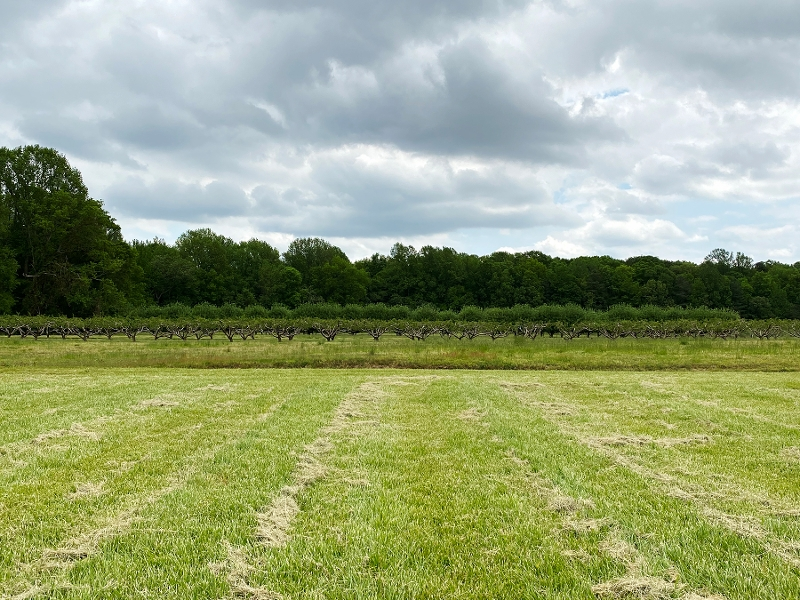 Orchard image